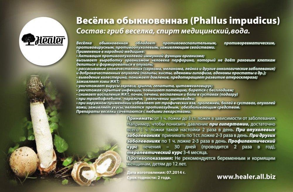 гриб веселка лечебные свойства при простатите
