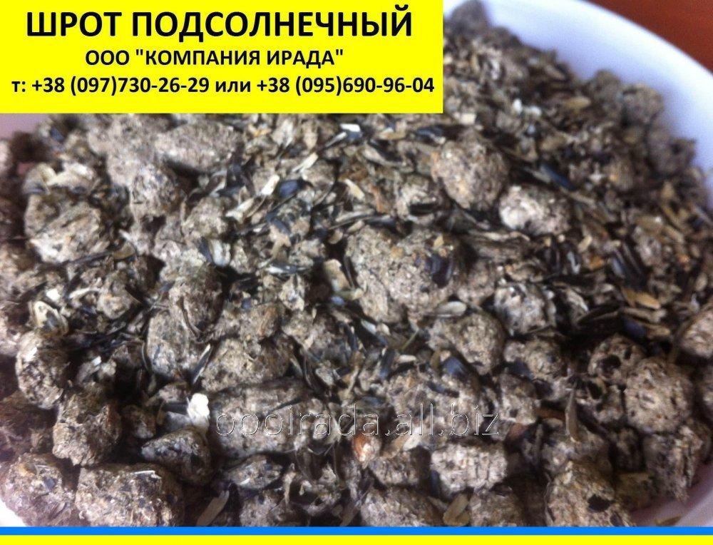 shrot_podsolnechnika_podsolnechnyj_zhmyh