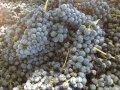 Концентрований виноградний сік