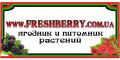 Сушеные ягоды