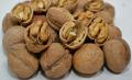 Грецкие орехи в скорлупе + 32 мм