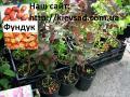 Розсада декоративних рослин
