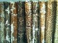 Мех камышового кота (рыси)