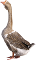 Multifermental feed additive for ducks and geese