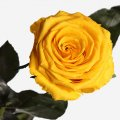 Стабилизированные цветы