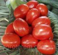 Семена томат Рио гранде F1 (Rio Grande F1) 2500 с.