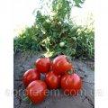 Семена томата Асвон F1 ( Aswan F1 ) 5 г