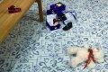 Напольная плитка Cicogres Lotto GRES