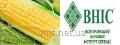 Насіння Кукурудзи Амарок  ФАО 220