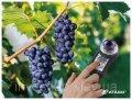 Измеритель показателя Brix в винограде PAL-HIKARi 2 ATAGO
