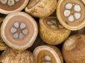 Водорастворимые масла из Италии, 17 видов
