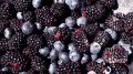 Berries. Guelder-rose, bilberry, blackberry, cowberry, blueberry, cranberry, mountain ash red, mountain ash black-fruited. Fresh cooled, frozen. Rovno Region.