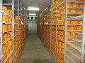 Камеры хранения средне- и низкотемпературные, склады и овощехранилища, камеры расстойки, климатические системы.