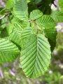 Sadzonki drzew leśnych