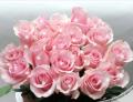 Продажа всех сортов роз,