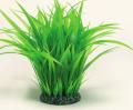 Многолетние злаковые травы