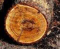 Дрова сосновые отходы пилорамы