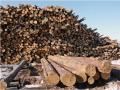 Дрова. Дрова от производителя. Дрова разных пород деревьев.