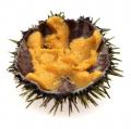 Sea Hedgehog Caviar 200g