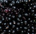 El sáuco congelado / IQF Elderberry