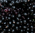 Бузина замороженная/ IQF Elderberry