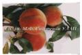 Персик ранних, средних, поздних сортов