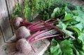 Инновация: Биопрепараты для подавление стрелкования и цветения растения сахарной свеклы