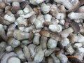 Белые грибы