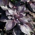 Семена базилика фиолетового Философ 100 гр