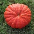 Семена тыквы 100 грамм Руж Виф Де`Тамп Clause