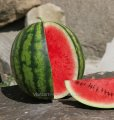 Seeds of water-melon of Katharine of F1