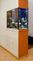 Морской аквариум, встроенный в перегородку