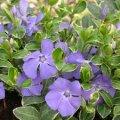 Kwiaty wieloletnie