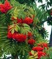 Alte plante de gradina
