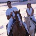 Конная прогулка для двоих, катание на лошадях, лошади, подарки-впечатления