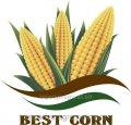 Семена кукурузы Днепровский 257СВ Бест Корн