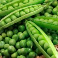 Вальверде f1 / valverde f1 — горох, syngenta 100 000 семян