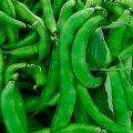 Кларон f1 / klaron f1 — фасоль спаржевая, syngenta 100 000 семян