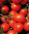 Фуззер f1 / fuzzer f1 - томат детерминантный, seminis 1 000 семян