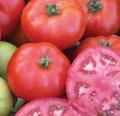 Мармара f1 / marmara f1 — томат, yuksel seeds 1 000 семян