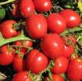 Реди f1 / redi f1 — томат детерминантный, esasem  1 000 семян