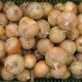 Хилтон f1 / hilton f1 - лук репчатый, syngenta 250 000 семян