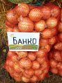 Банко / banko - лук репчатый, syngenta 250 000 семян