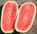 Каролина f1 / karolina f1 - арбуз, clause 10 семян