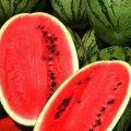 Астрахан f1 / astrahan f1 — арбуз, syngenta 1 000 семян