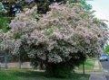 Krzewy dekoracyjne