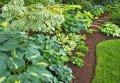 Wieloletnie rośliny zielne