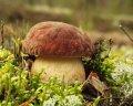 冷冻的蘑菇