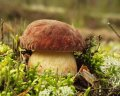 Замороженные белые грибы класс 1, класс 2