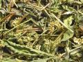 Водяной перец трава
